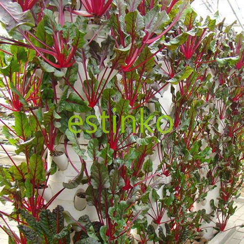 Edible Leaf Beet Seeds 35pcs/bag Vegetable Seeds Beta V