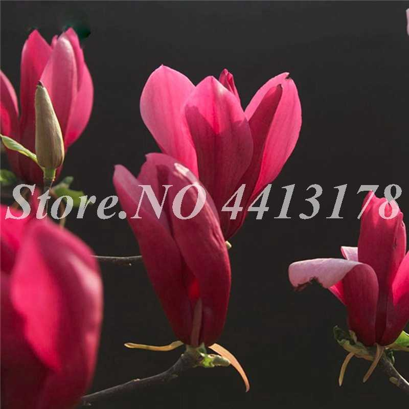 Detail Feedback Questions About 10 Pcs Bag Red Magnolia Flowers