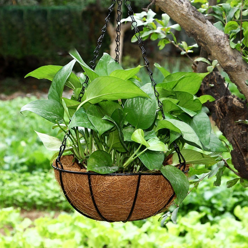 Hanging Orchid Flower Pot Green Flower Pot Personality Creative Meaty Round Large Iron Art Coconut Palm Basket Flower Pots