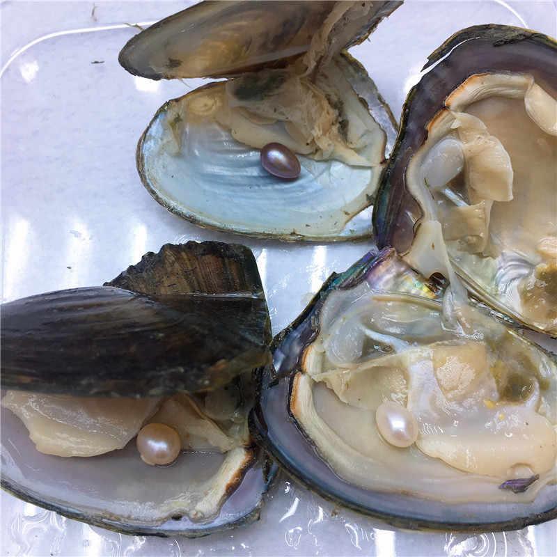 Süßwasser Vakuum-pack Oyster Wünschen Perlen, perle Mussel Shell mit 7-8mm Oval Reis Perle Im Inneren, Zufällig farbe perle