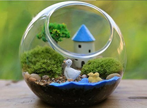 Mkono Glass Vase Air Plant Terrarium Airplants Container Succulent  Terrariums Plants Planter Table Display Decorative, Globe-in Vases from  Home & Garden on ...
