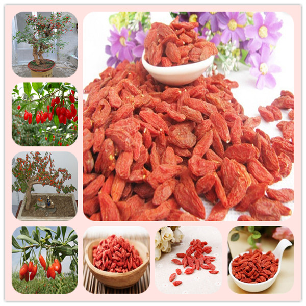 200Pcs Goji Berry Chinese Wolfberry Bonsai Herbs Bonsai Potted Plants Home Garden Outdoor House Plants, Most Popular Heathy
