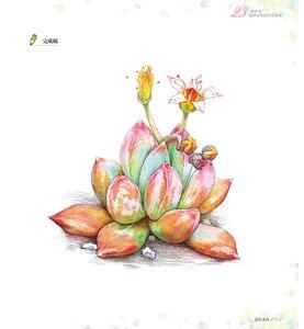 Image 4 - 새로운 컬러 연필 기본 자습서 도서: 23 스타일 succulents 아트 북에 배우기