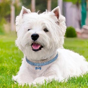 Blue Pink White Dog Rhinestone Necklace Bone Pendant Bling Collar Pet Decoration Small Animals Habitat Decoration Freeshipping 1