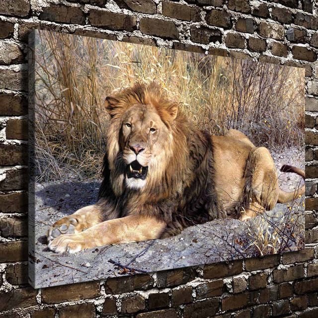 A0490 Natural Scenery Animal Lion Jungle Hd Canvas Print Home