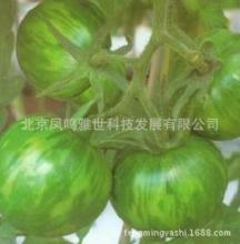 Yingying green face color tomato seeds 100 pcs Hot healthy vegetable