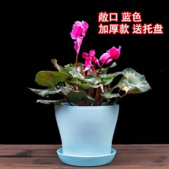 Blue Large Plastic Flower Pot For Orchid Bonsai Garden Decoration Outdoor Colored Cute Planter Flowerpot