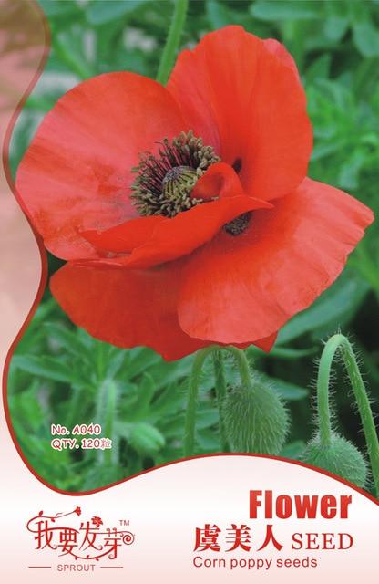 120 seeds original package iceland corn poppy seedssuch as beauty 120 seeds original package iceland corn poppy seedssuch as beauty like beautiful flowers mightylinksfo