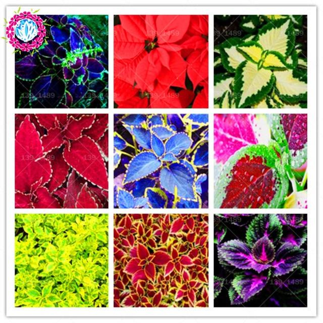 Вазочки для цветов фото