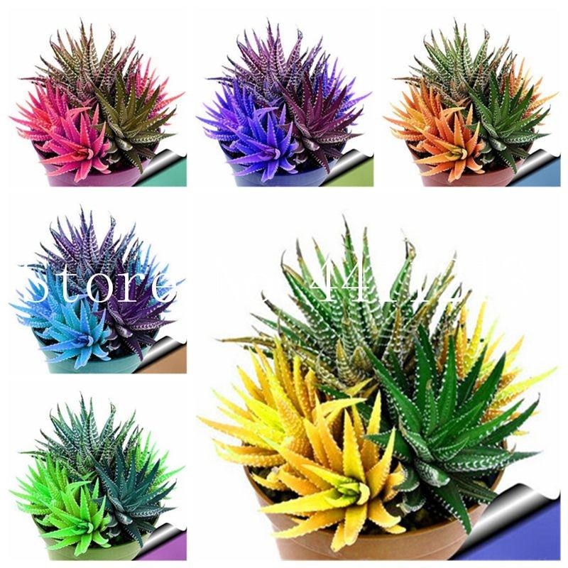 100 Pcs Colorful Rare Cactus Aloe Bonsai, Cactus Rebutia Variety Mix Exotic Flowering Cacti, Office Mini Plant Succulent