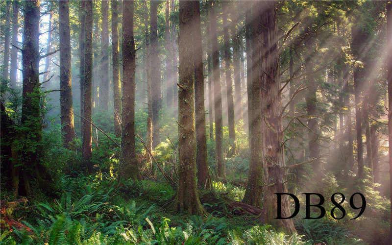 LB الفينيل التصوير سميكة القديم الغابات أشعة الشمس الأخضر العشب النباتات ديكور مخصص خلفية خلفية الدعائم استوديو الصور