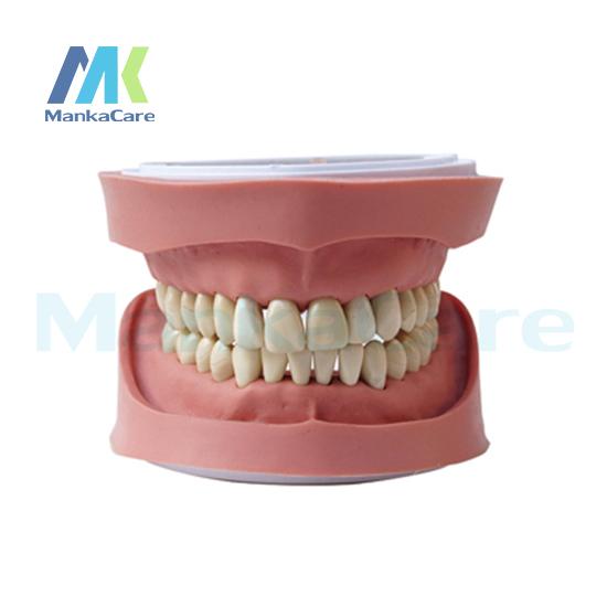 Manka Cuidar-K Padrão Modelo de Estudo/28 pcs Dente/Goma Macia/Sem parafuso Modelo Oral Dentes Modelo de dente