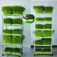 シード Sprouter トレイ土壌-無料ビッグ容量健康ウィートグラスで生産者カバー苗トレイもやしプレート水耕
