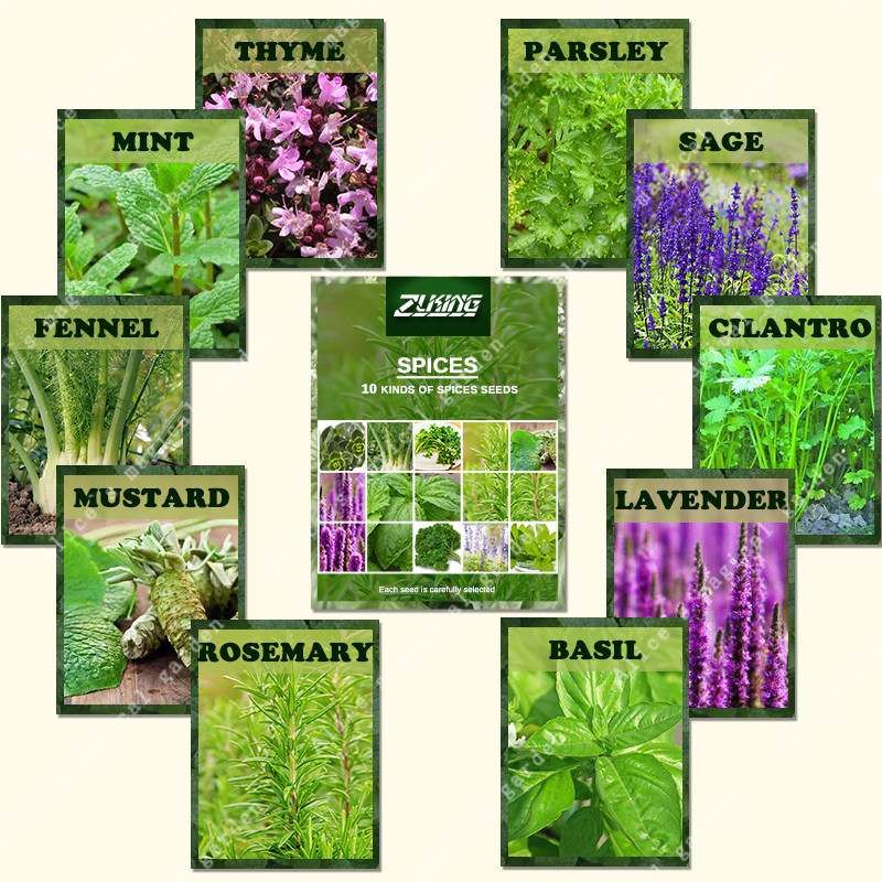 ZLKING 1100 Basil, Lavander, Creeping Thyme Mix Spice Combo True Flower For Home