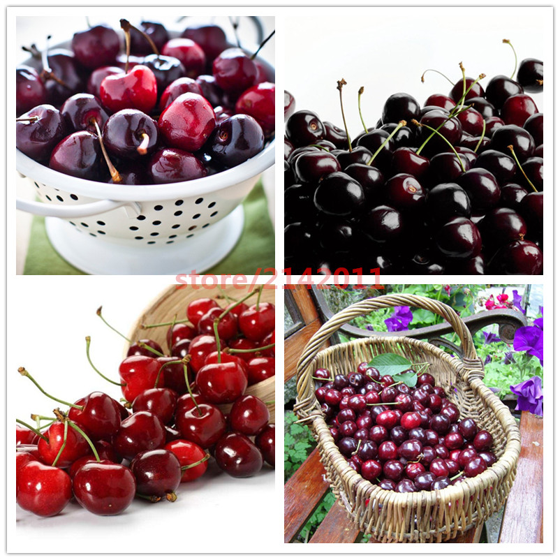 10pcs/bag mix red black cherry seeds,japanese cherry seeds,vegetable fruit seeds,plant cherry seeds bonsai plant for home garden