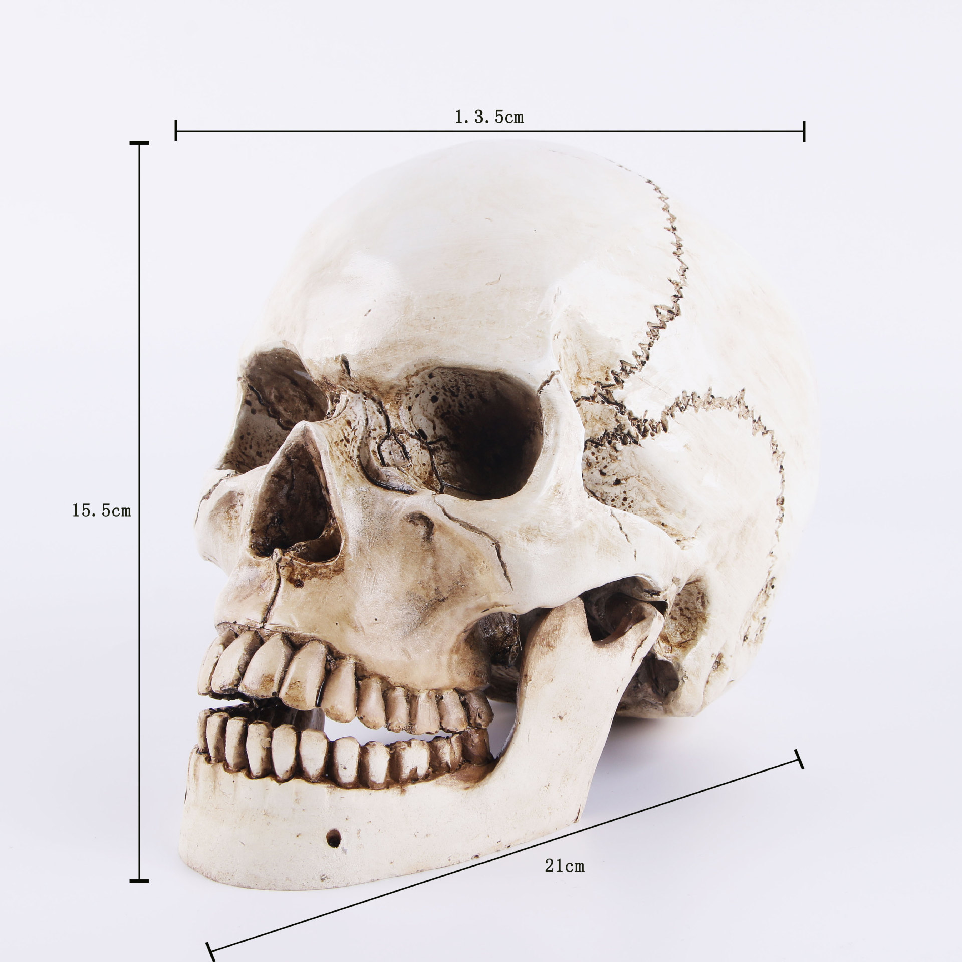 Skull Mold Medical Model Lifesize 1 1 Halloween Home Decoration Decorative Craft Skull Statue Gift in Statues Sculptures from Home Garden