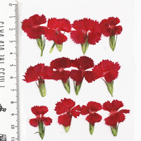 Press Flowers DIY Handmade Material For Card Decoration 1 Lot 120pcs Free Shipment Dried Flower