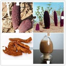 100g natural Cynomorium extract powder for men sex health improvement Cynomorium songaricum extract powder