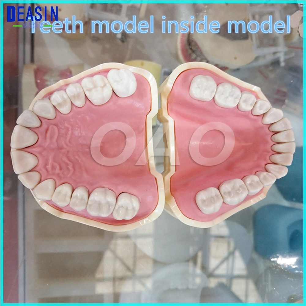 Dental Soft Gum Teeth Model Removable 28pc/32pc Teeth NISSIN 200 KAVO head model Compatible dentist teaching learning soarday children primary teeth alternating transparent model dental root clearly displayed dentist patient communication
