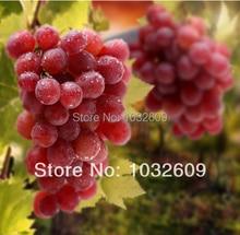 150pcs Red grape seeds Sweet sementes frutas Grape Fruit Seeds fruit salad tree For Home Garden Plant FTFR002