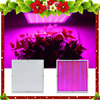 200W 2009Leds AC85 265V LED Grow Light For Flowering Plant And Hydroponics System For Outdoor Garden