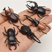 5pcs 5.5cm simulation beetle Toys Special Lifelike Model Simulation insect Toy nursery teaching aids joke toys(China)