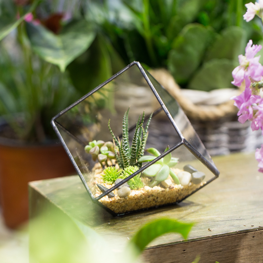Handgjorda Tabletop Succulent Plant Micro Landskap Terrarium Bonsai Polyhedron Clear Glass Geometrisk Terrarium Box Balkong Pot