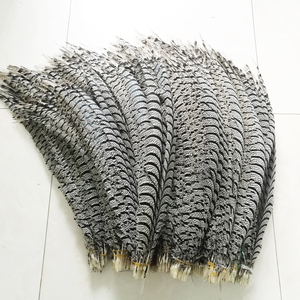 Image 4 - Hotsale 10 adet 80 100 cm uzun Sülün Tüyleri Doğal Zebra Sülün Kuyruk Tüyleri Samba Tüy Lady Amherst Sülün tüyler