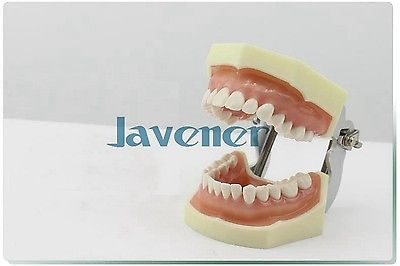 Dental Tooth Teaching Model Oral Medicine Practice Teaching Model dental removable dental model dental tooth arrangement practice model with screw teaching simulation model oral materials