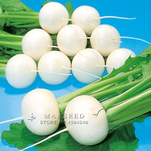 100 Round white radish seeds Fruit and vegetable seeds  nutrition excellent diy home garden Free Shipping