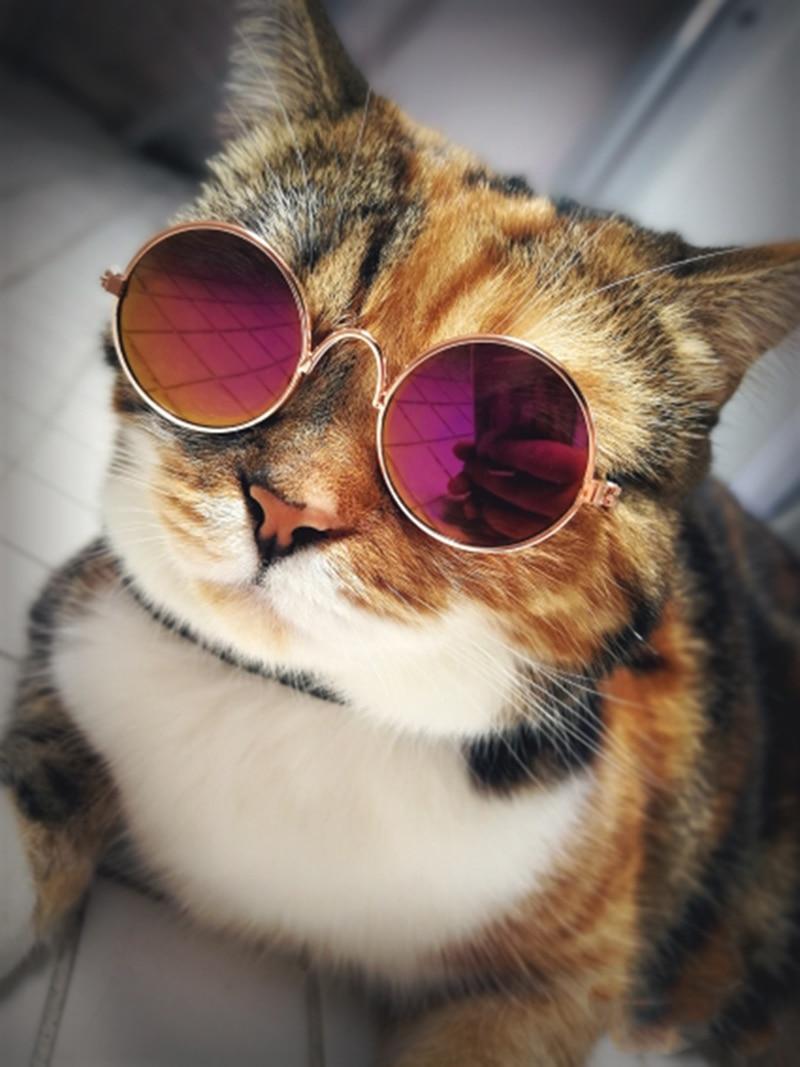 pet sunglasses_2