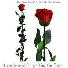 5 шт. натуральные консервированные ветви розы стволовых 50 см для прививки цветов место Свадебные украшения дома с разной длиной