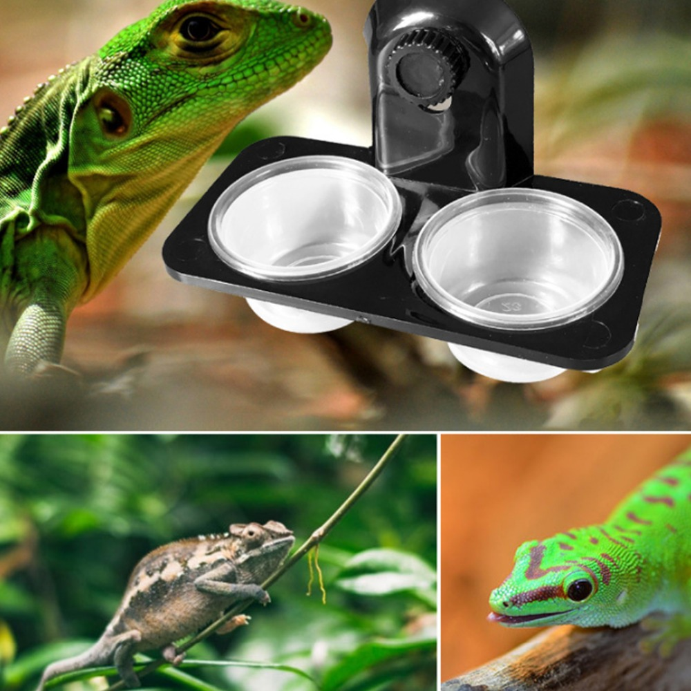 Reptile Feeder Single Double Feeding Bowl Food Water Insects Spider Breeding Tank Dispenser Feeding Dish Pot Screw Suction Cup