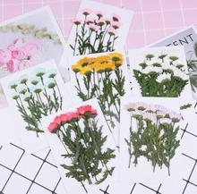 120pcs Pressed Dried Chrysanthemum with Leaves Filler For Epoxy Resin Jewelry Making Postcard Frame Phone Case Craft DIY