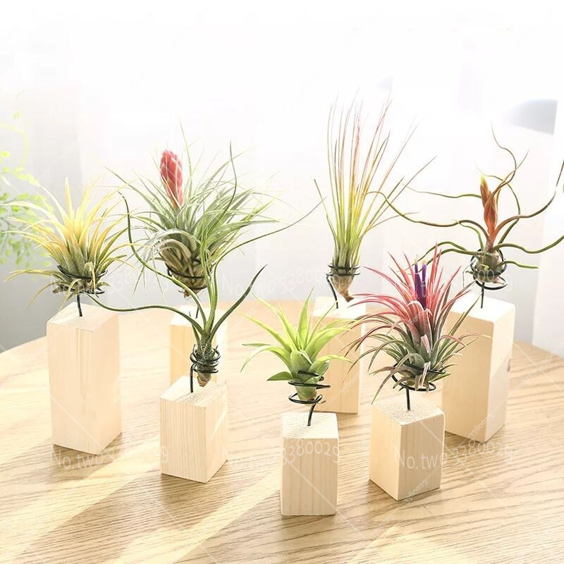 Top 10 Most Popular Flowering Air Plants Ideas And Get Free