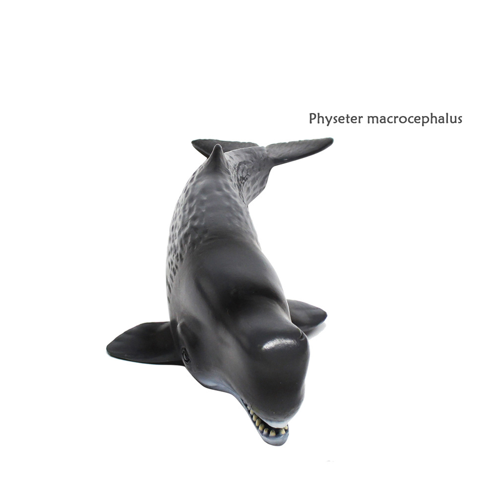 Toys & Hobbies Bolafynia Children Toy Physeter Macrocephalus Sea Animals Model Baby Kids Toy For Christmas Birthday Gift