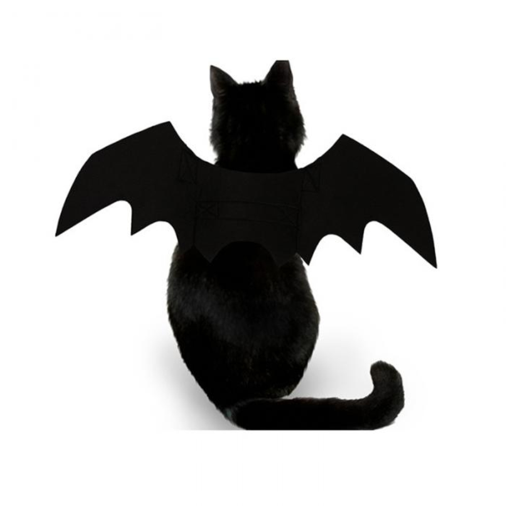 Halloween Cat Bat Costume 3