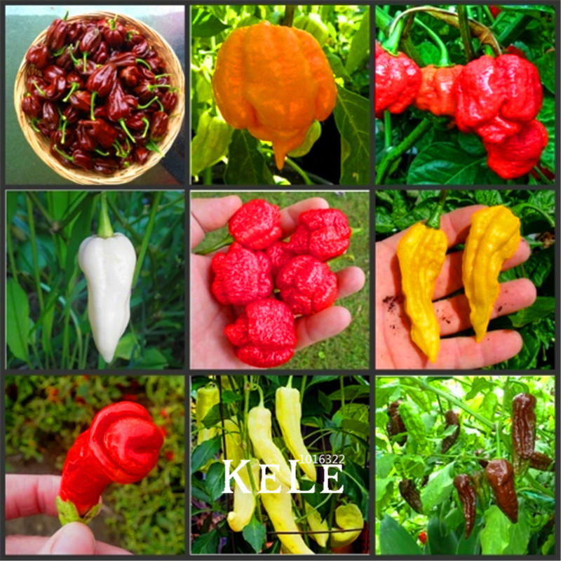 Lowest Price!100Pcs/Pack 16 Kinds To Choose Hot Chilli Pepper Capsicum Vegetable Bonsai,Happy Farm,#MODSRM