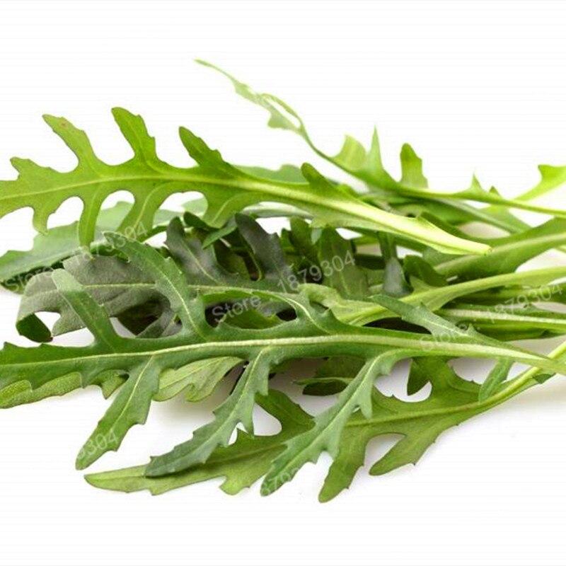 100 шт./пакет недавно Руккола бонсай здоровый Овощной Флорес специально для Тесты Зеленый завод для дома и сада