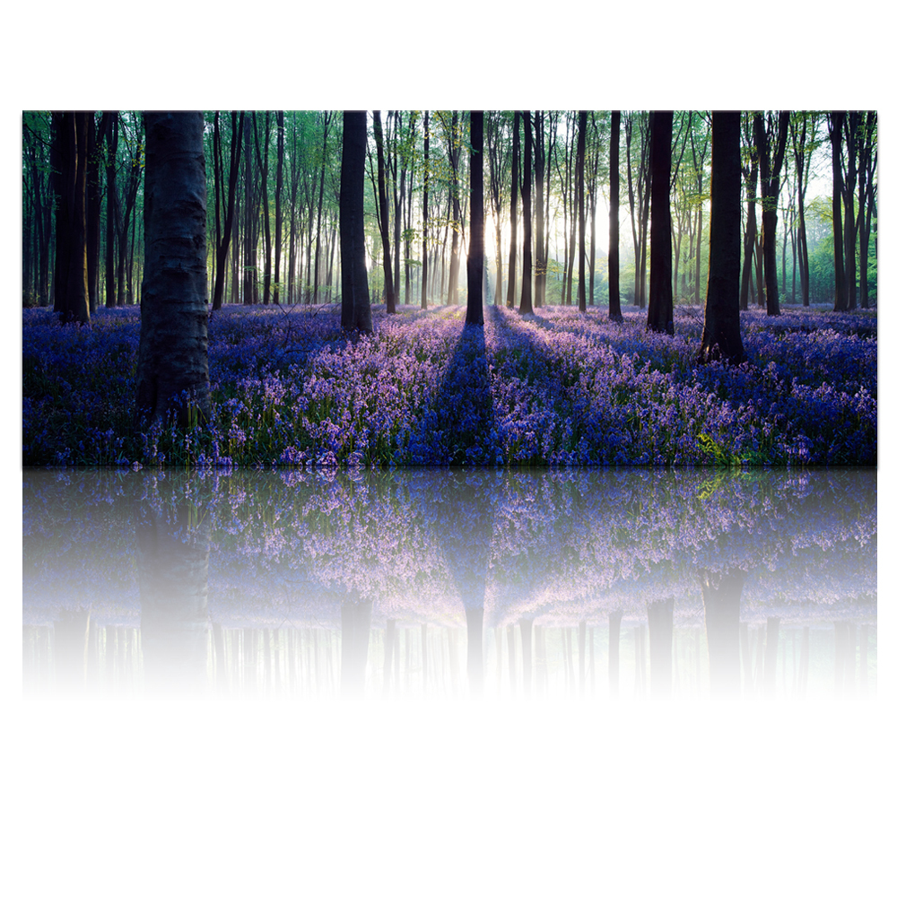 FREE SHIPPING Large Size Canvas Wall Art with Frame,Lavender Forest,Mild Sunshine,Landscape Canvas Prints Art Framed Wall Decor