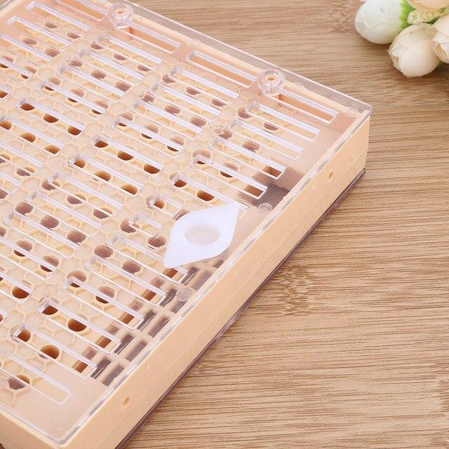 Tienda Online Abeja Reina fomentar caja de plástico de color ...