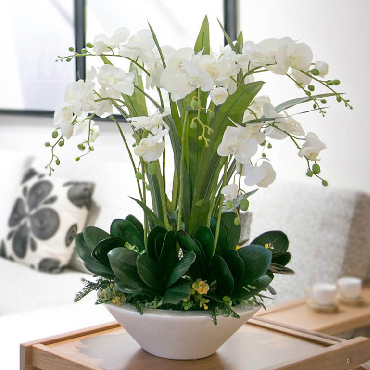 Buy 200 pcs bag unique white phalaenopsis seeds potted indoor flowers bonsai - Indoor potted flowers ...