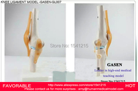 Анатомический медицинский корпус человека функциональная модель Связки коленного сустава ортопедические обучения коленного сустава