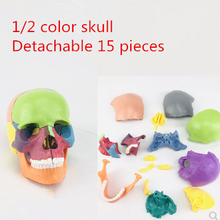 4D Цвет разобранный череп анатомическая модель, для медицинского обучения, Художественная Скульптура, Стоматологическая модель
