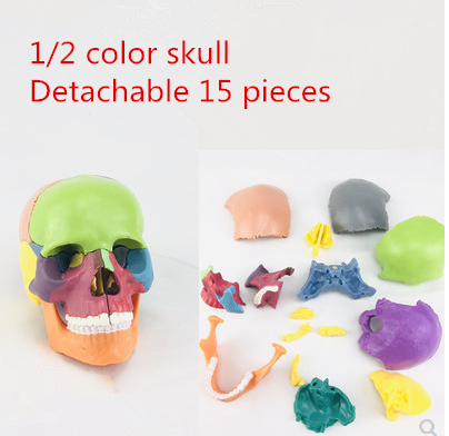 4d cor desmontado crânio modelo anatômico, para ensino médico, escultura de arte, modelo dental.