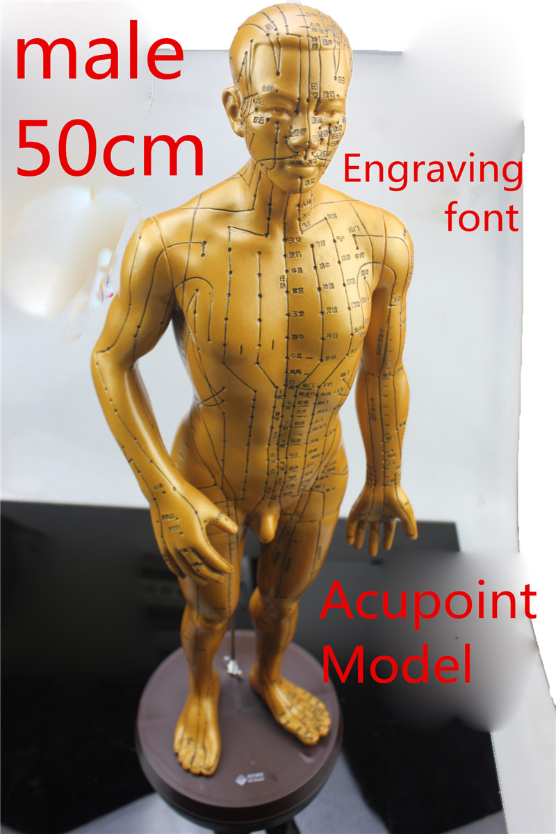 medical HD clear male Electroplate Pure copper human body meridian acupuncture points hard model Engraving font acupoints statue hd hard 60 cm male human acupuncture acupoint model muscle anatomy human body acupuncture point model human acupoints model