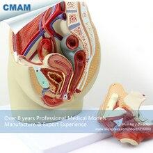 CMAM-ANATOMY02 Life Size Female Pelvis Section Anatomical Model, 3part, Anatomy Models > Male/Female Models > Female Models