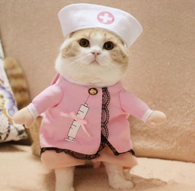 2016Cat-Costume-Cat-Clothes-Sexy-Nurse-Uniform-Free-Shipping-D83.jpg_640x640