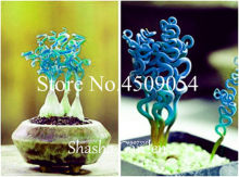 100 pcs Mixed color Grass bonsai - (Spiral Grass) perennial hardy ornamental grass easy to grow grass for garden(China)