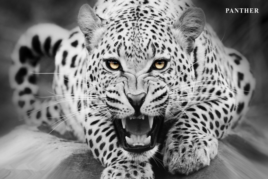 Benutzerdefinierte Leinwand Kunst Leopard Poster Leopard Tier Tapete ...